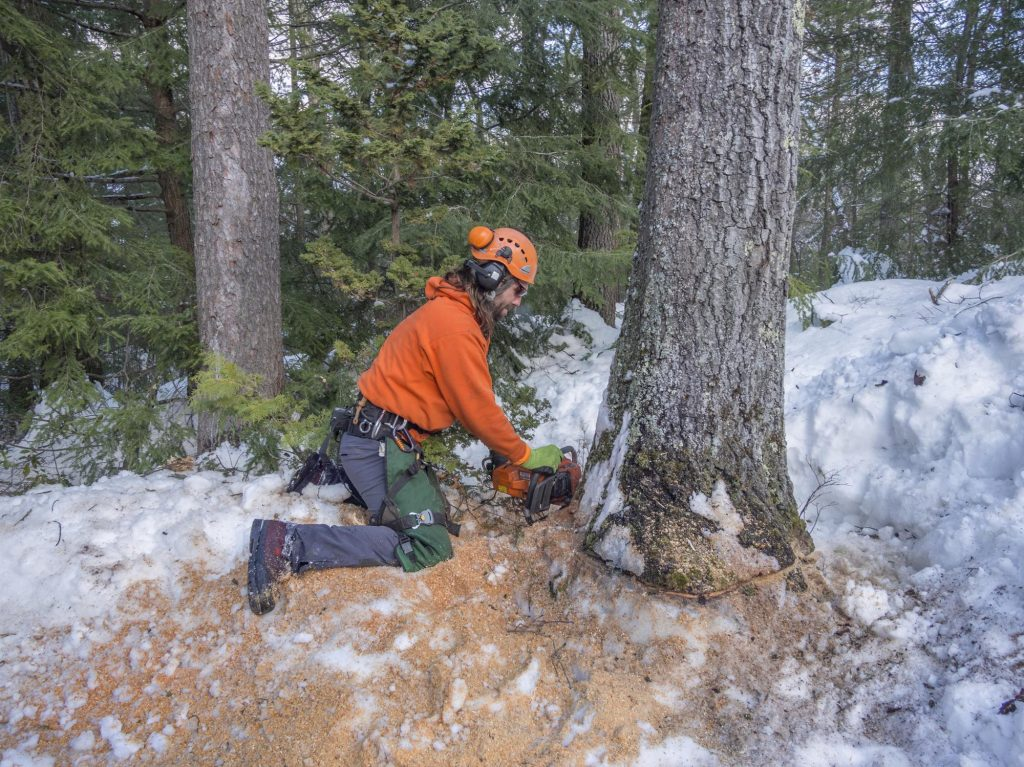 tree services worker working on tree cutting